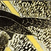 Jays, Black & Yellow