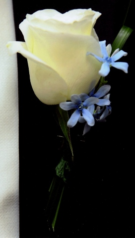 Stacey Bode Photography White rose accented with light blue tweedia and lily grass.