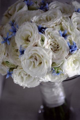 White roses, white ranunculus, and blue tweedia bridal bouquet.