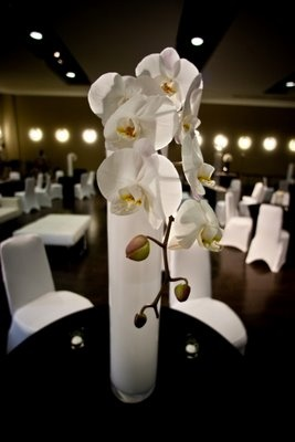 """Single white phalaenopsis orchid in a white 32"""" cylinder vase.  Modern Design - White Phalaenopsis Orchid"""