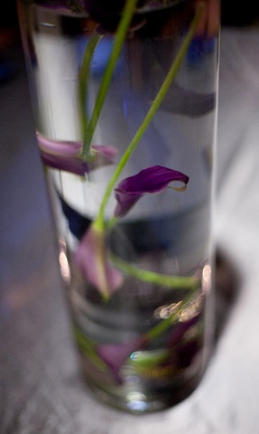 "Submerged Purple Mini Calla Lilies in a 20"" clear, glass, cylinder vase."