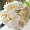 Phalaenopsis and Gardenia Bridal Bouquet