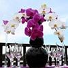 Modern Phaelanopsis Orchid Design