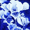Irises on Blue  Oil on Board