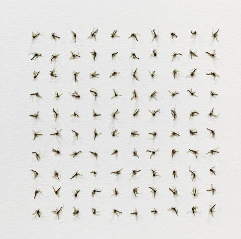 One hundred bugs, one hundred bugs and one hundred bugs (detail)
