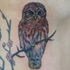 Owl on ribs