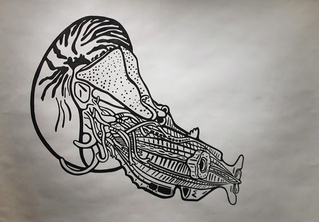 Nautilus Vs. Nautilus