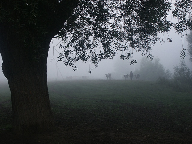 Taking the cows to pasture in the misty dawn, Petryliv