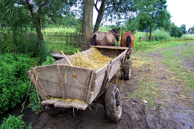 Horse with wagon awaiting their owner