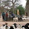Nomadic sheperders drawing water for their flocks