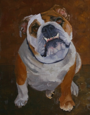 pet portrait commission, bulldog