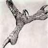 Specimen VIII:  Claw