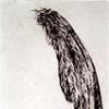 Specimen VIII:  Wing