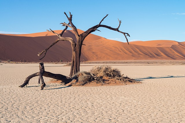 One Tree on the clay pan in Sossusvlei, Namibia
