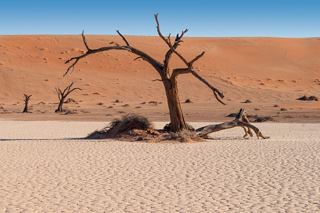 A second view of a tree in Hidden Vlei in Sossusvlei Namibia