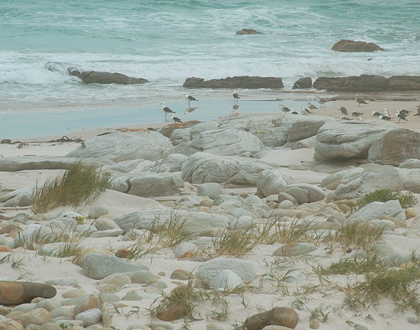 Gulls on the beach in Cape Hope South Africa