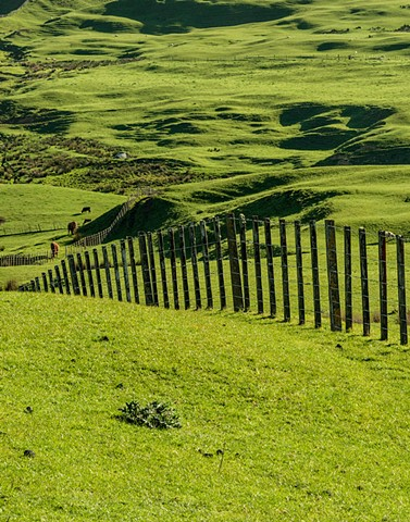 Rich green landscape of a farm in the North Island, New Zealand
