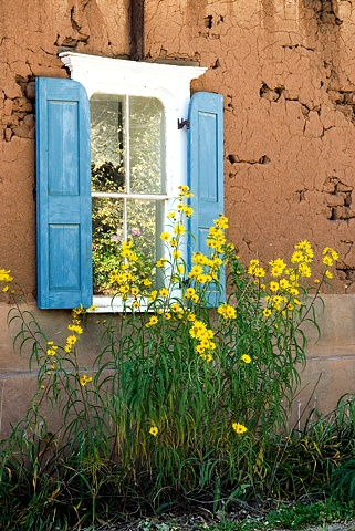 Reflections of yellow flowers in the blue shuttered window of stuccoed house near Taos New Mexico