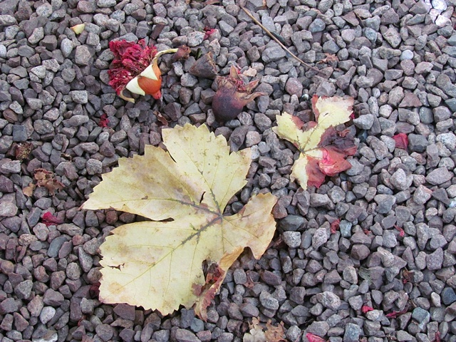 leaf, flower pods, seed pods, gravel, grey, rose, red, yellow