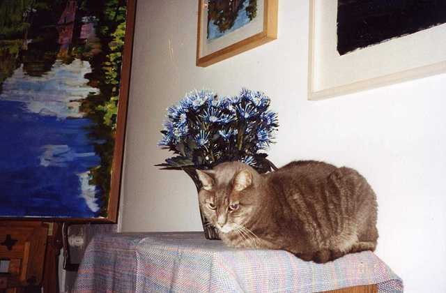 Grey cat sitting on table under blue flowers during art opening.