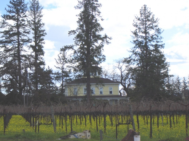 House surrounded by vineyards