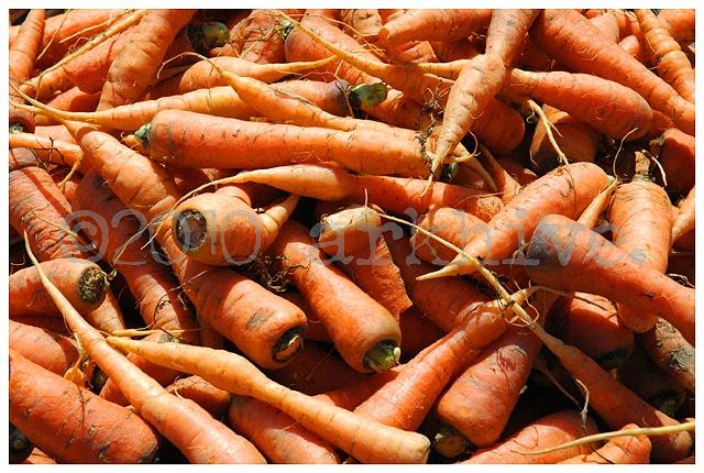 san francisco carrots