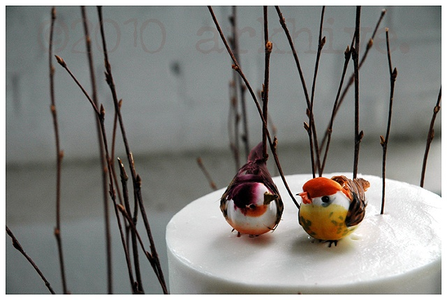 'love birds' ...justin n' talitha