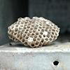 'mailbox hive'