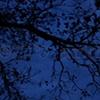 'black tree + blue night'