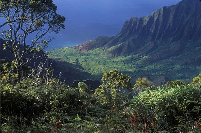 cliffs, rainforest, Kalalau Valley, Hawaii, pali,lookouts