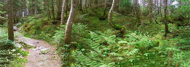 The Long Trail of Vermont, hiking, forests, alpine flora