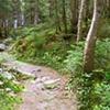 Long Trail near Mt. Abraham, Vermont