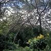 Hawaiian Rainforest, Kauai