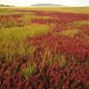 Essex Wetlands and Hog Island