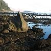 Low Tide and Seastacks, Cape Johnson, Washington