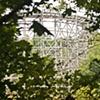 Abandoned Amusement Parks 5