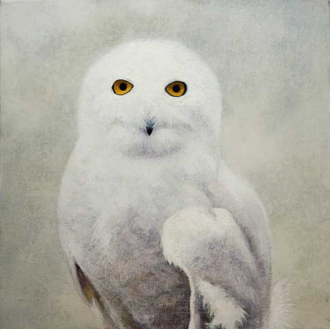 Hildegaard (Snowy Owl)
