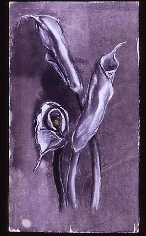The Apex (Calla Lily)