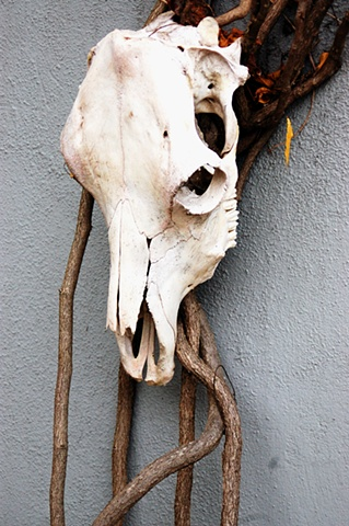 Cow Skull on Michigan