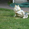 Cat on Monterey