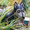 Ceramic Dog on San Ramon