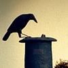 Raven on Fresno