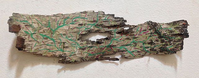 Birch Bark Drawing #26