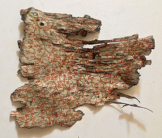 Birch Bark Drawing #25