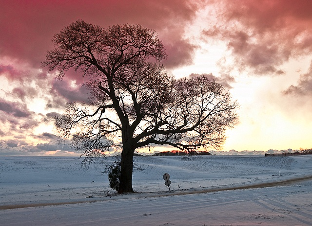 Winter Sunrise with Old Tree by JoAnne Dumas