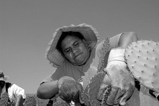 Zenaida is harvesting nopal, an edible cactus in San Augustín, Morelos.