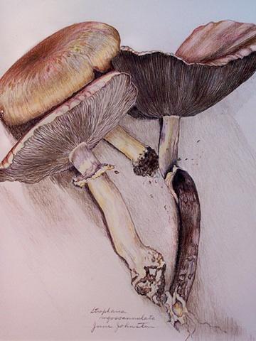 More spring mushrooms