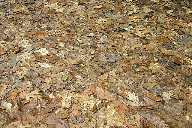 installation made of leaves, natural materials, nature art