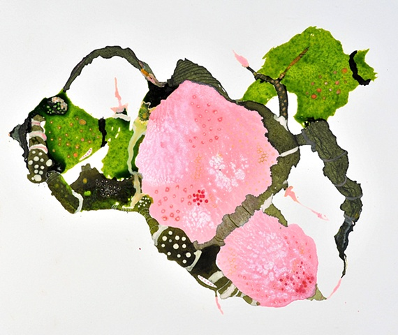 Pink Algae in Moss