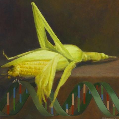 Elizabeth Malunowicz DNA, oil on panel, still life GMO, corn